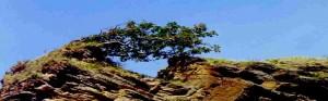 treeoak-a