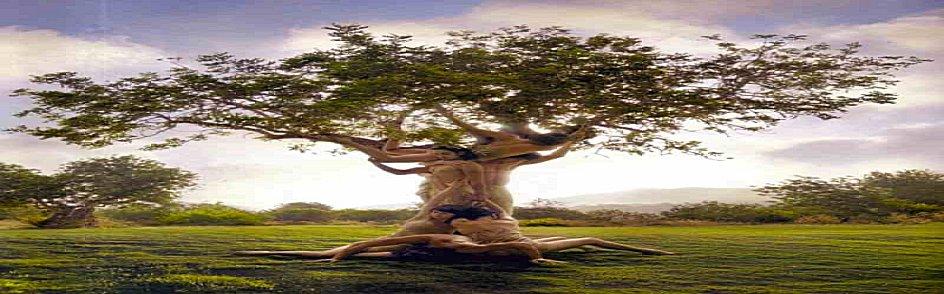 treeolife-a