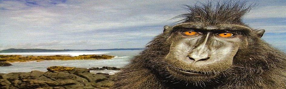 Monkeyface-a