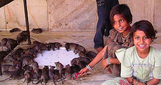 dream of dead rats