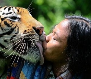 TigerLoveMan