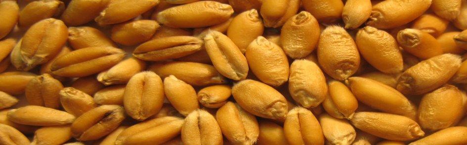 Wheat-a