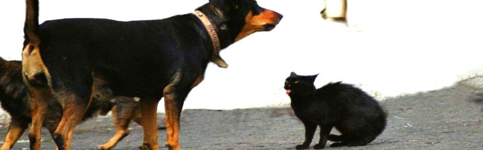 catdog-a