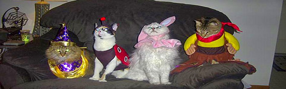 cats-a