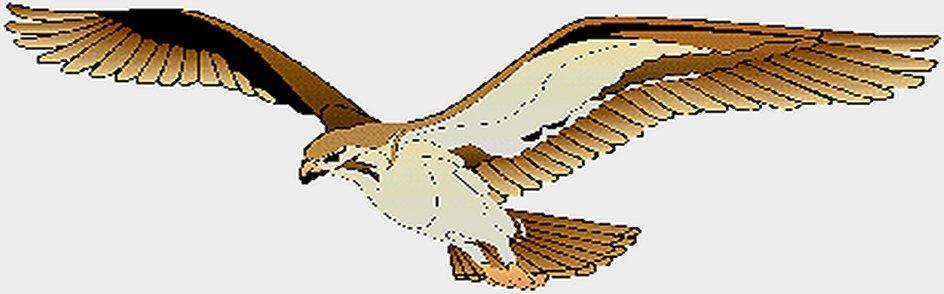 hawk3-a