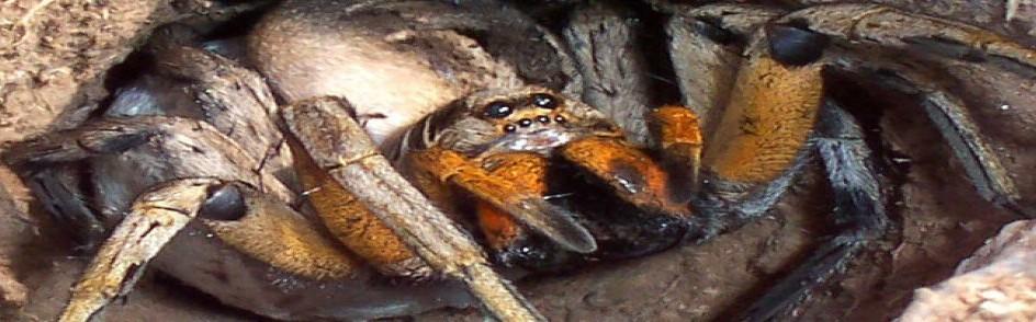 spider3-a